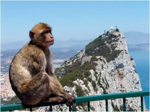 Un mono de Gibraltar mira de reojo la bahía de Algeciras, lugar donde se encuentran las aguas actualmente en disputa entre españoles y británicos. Fuente: Hola Granada.
