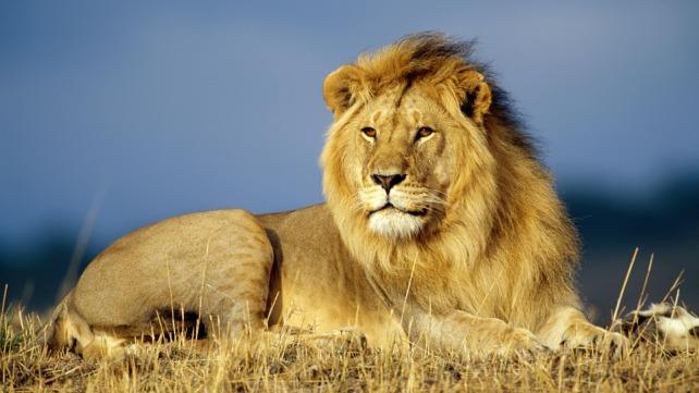 leon_africano1